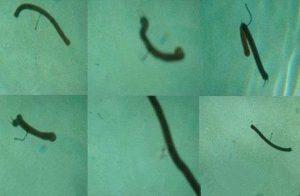 软虫怎么挂钩 软虫怎么挂钩怎么穿线(图片)