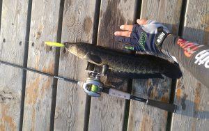 路亚黑鱼季节和最佳时间 路亚钓黑鱼什么季节什么时间最好