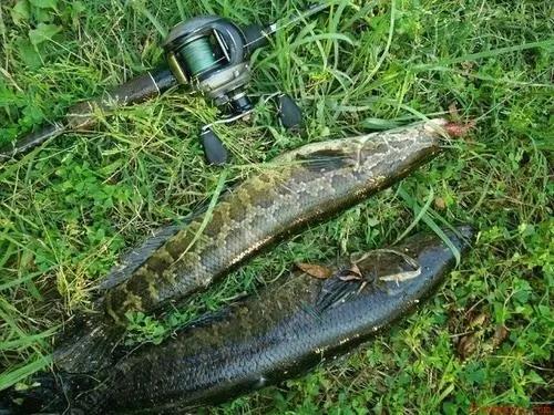 路亚黑鱼技巧 如何寻找黑鱼
