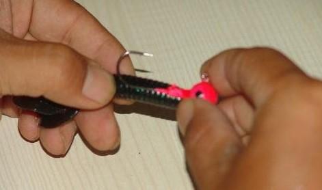 卷尾蛆什么颜色比较好 卷尾蛆颜色怎么选择