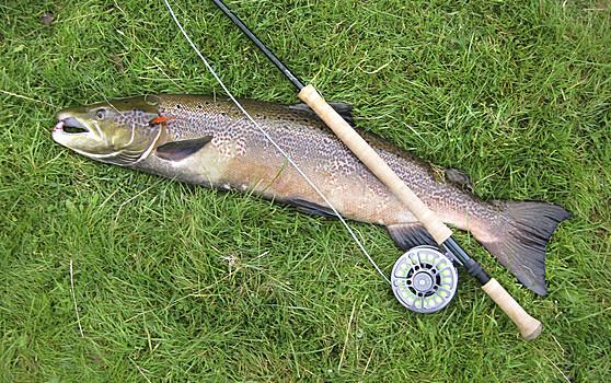 路亚钓鱼什么天气鱼口好
